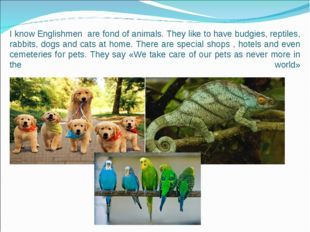 I know Englishmen are fond of animals. They like to have budgies, reptiles, r