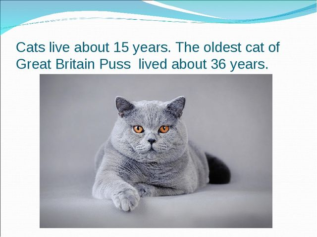 Cats live about 15 years. The oldest cat of Great Britain Puss lived about 36...