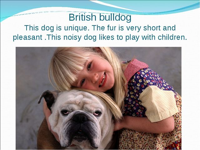 British bulldog This dog is unique. The fur is very short and pleasant .This...