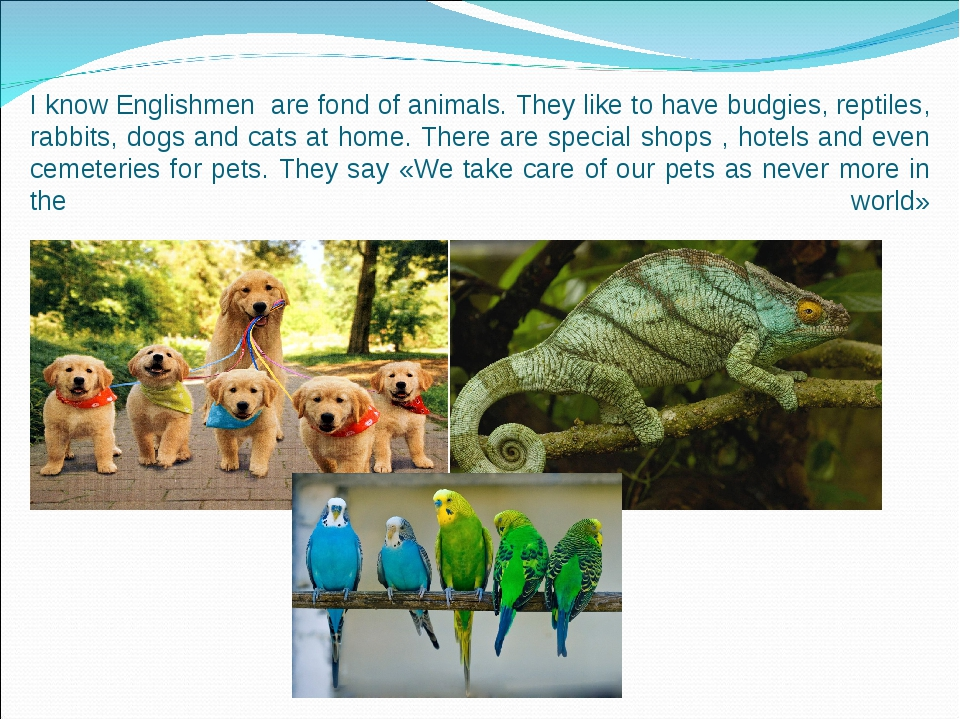 I know Englishmen are fond of animals. They like to have budgies, reptiles, r...