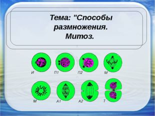 """Тема: """"Способы размножения. Митоз."""