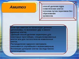 Амитоз Если при амитозе не происходит деление цитоплазмы, то возникают дву- и
