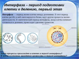 Интерфаза – период подготовки клетки к делению, первый этап клеточного цикла
