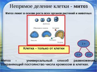 Непрямое деление клетки - митоз Клетка – только от клетки Митоз лежит в основ