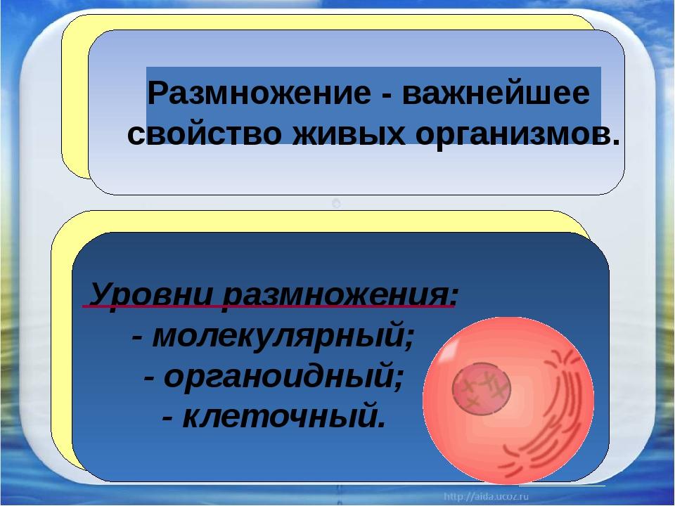 Размножение - важнейшее свойство живых организмов. Уровни размножения: - мол...