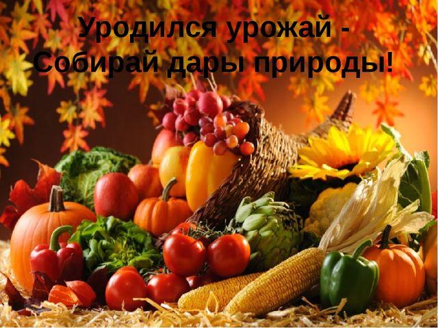 Уродился урожай - Собирай дары природы!