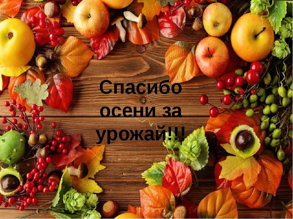 Спасибо осени за урожай!!!