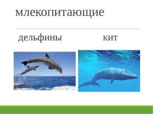 млекопитающие дельфины кит