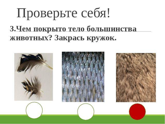 Проверьте себя! 3.Чем покрыто тело большинства животных? Закрась кружок.