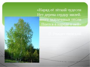 «Наряд её лёгкий чудесен Нет дерева сердцу милей. И много задумчивых песен По