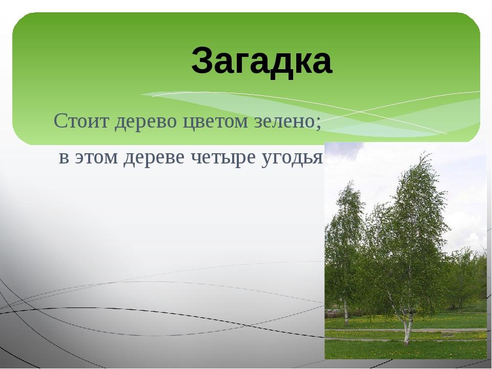 Стоит дерево цветом зелено; в этом дереве четыре угодья: Загадка