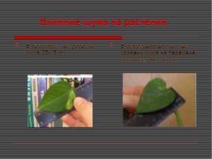 Влияние шума на растения В квартире, где уровень шума 35-45 дц В рекреации шк
