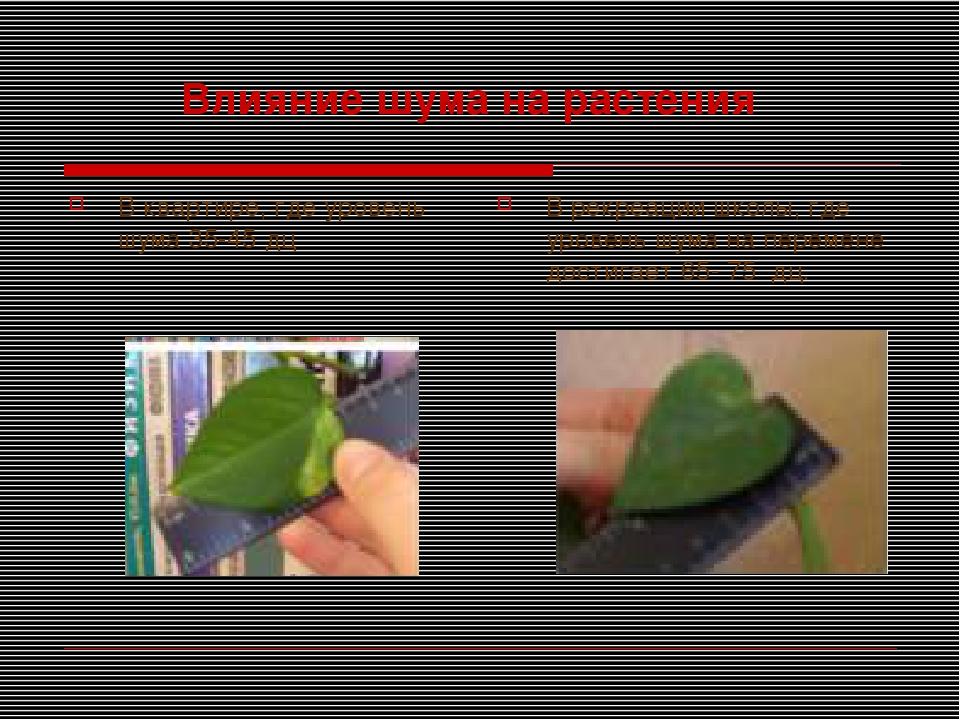 Влияние шума на растения В квартире, где уровень шума 35-45 дц В рекреации шк...