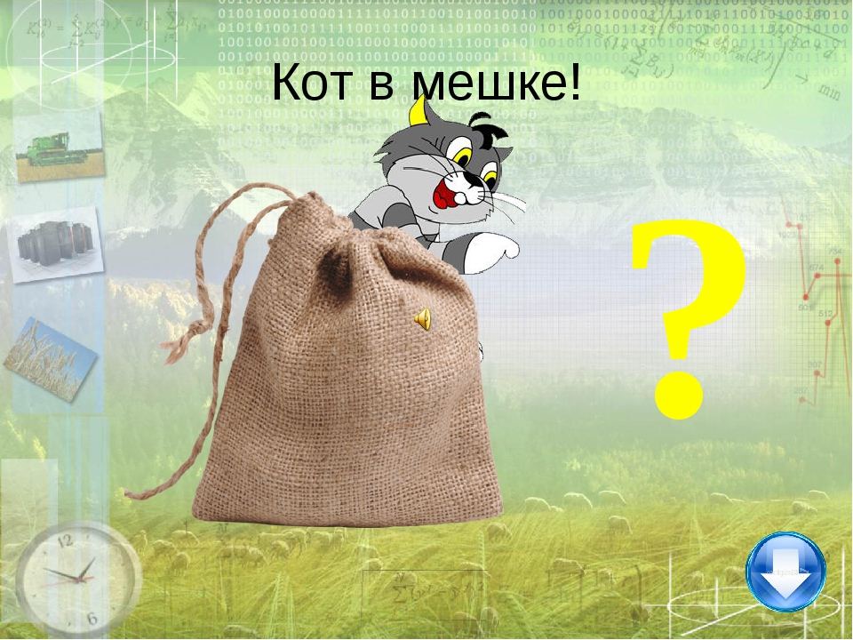? Кот в мешке!