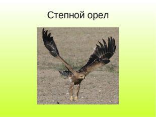 Степной орел