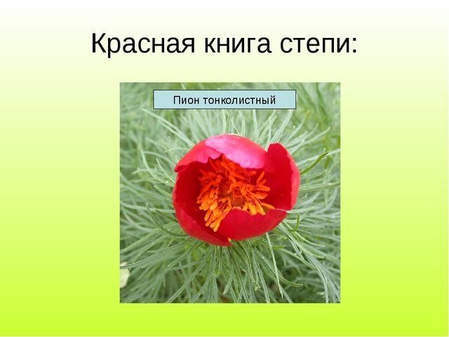 Красная книга степи: Пион тонколистный
