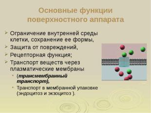 Основные функции поверхностного аппарата Ограничение внутренней среды клетки,