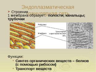 Особенности растительных клеток В растительных клетках присутствуют все орган