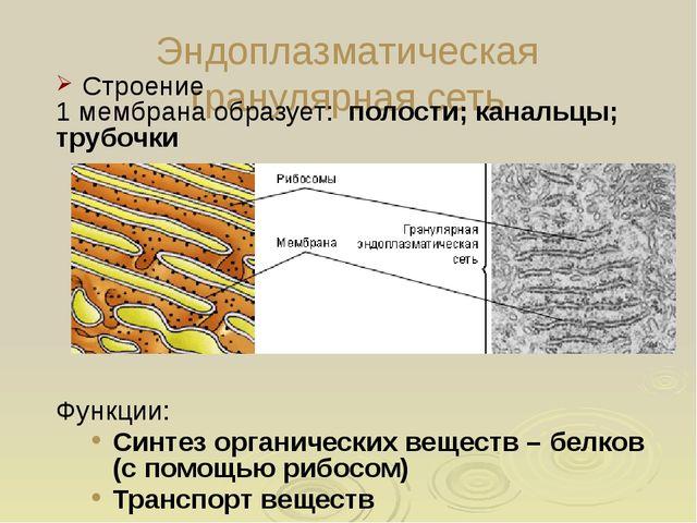 Особенности растительных клеток В растительных клетках присутствуют все орган...