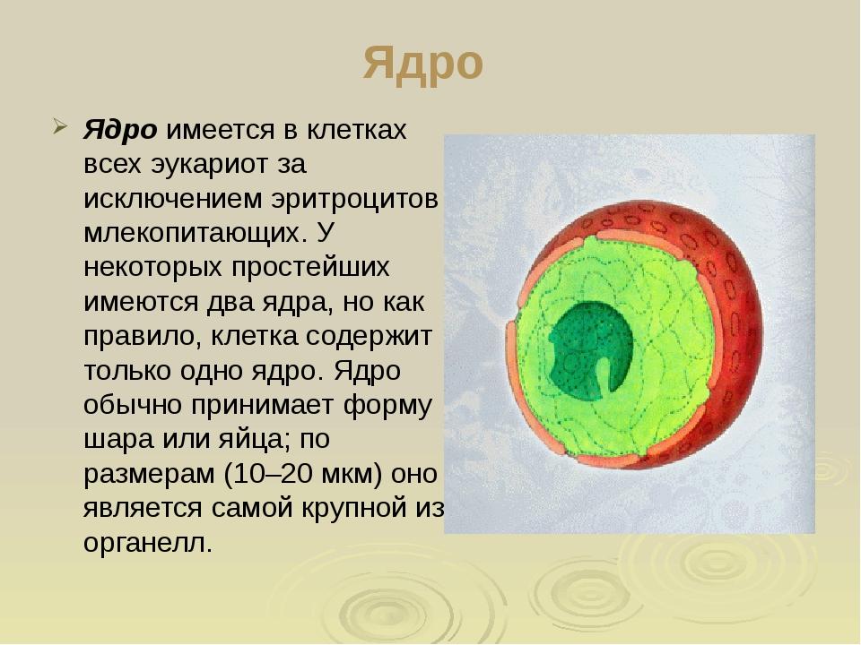 Как сделать ядро клетки