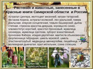 Растения и животные, занесенные в Красные книги Самарской области и России А