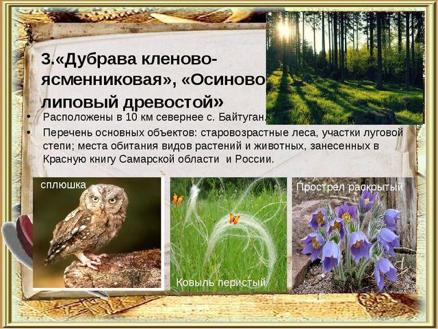 3.«Дубрава кленово- ясменниковая», «Осиново- липовый древостой» Расположены...