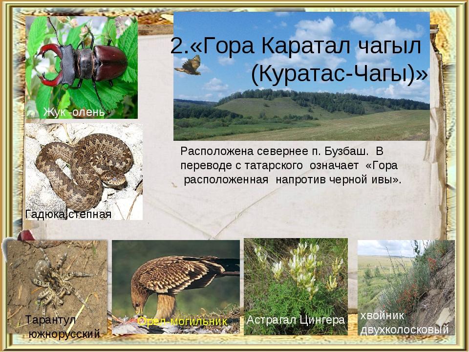 2.«Гора Каратал чагыл (Куратас-Чагы)» Расположена севернее п. Бузбаш. В перев...