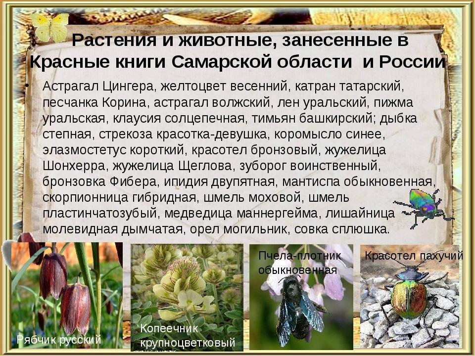 Растения и животные, занесенные в Красные книги Самарской области и России А...