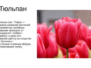 Тюльпан Тюльпан(лат. Tulipa) — родовое название растений из семействалилейн