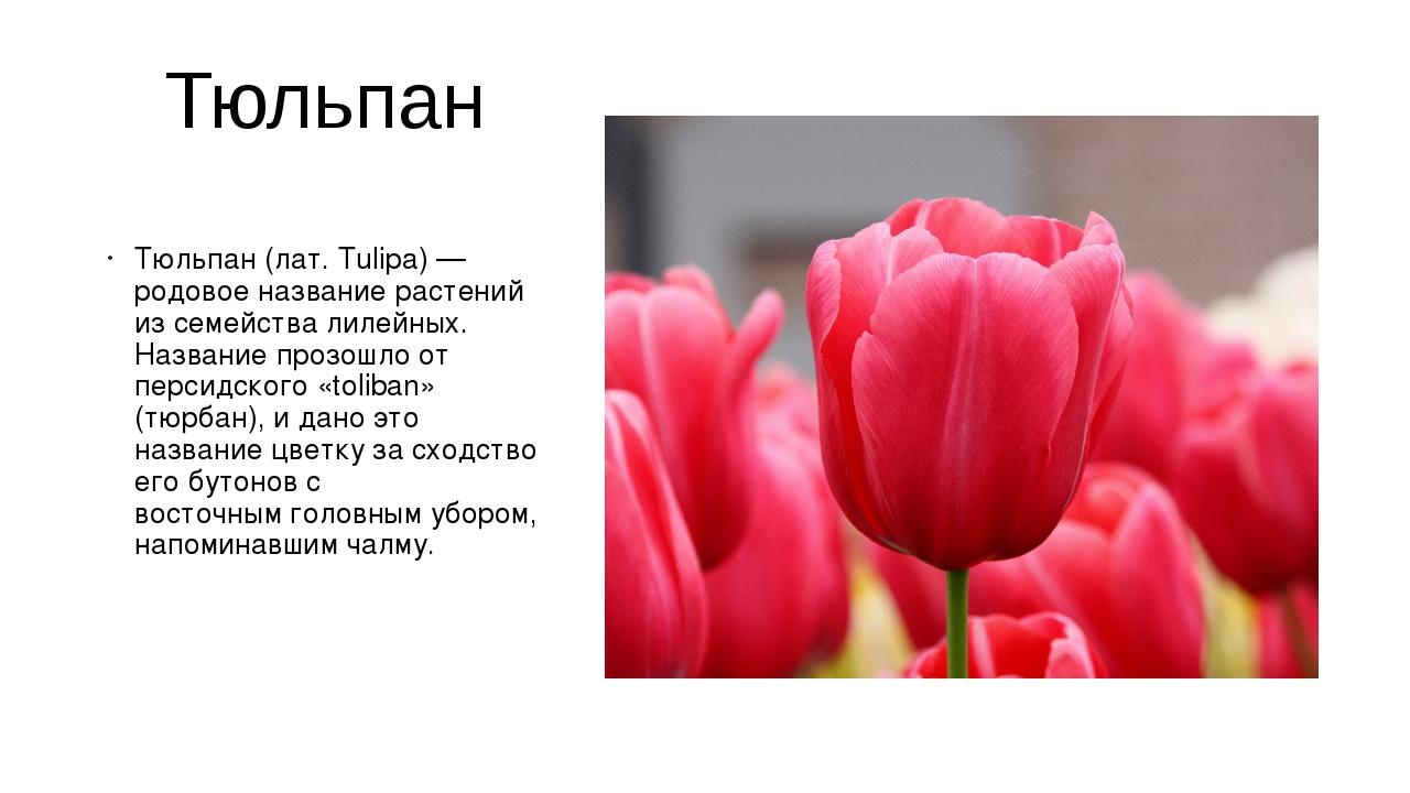 Тюльпан Тюльпан(лат. Tulipa) — родовое название растений из семействалилейн...