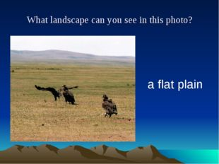 What landscape can you see in this photo? a flat plain