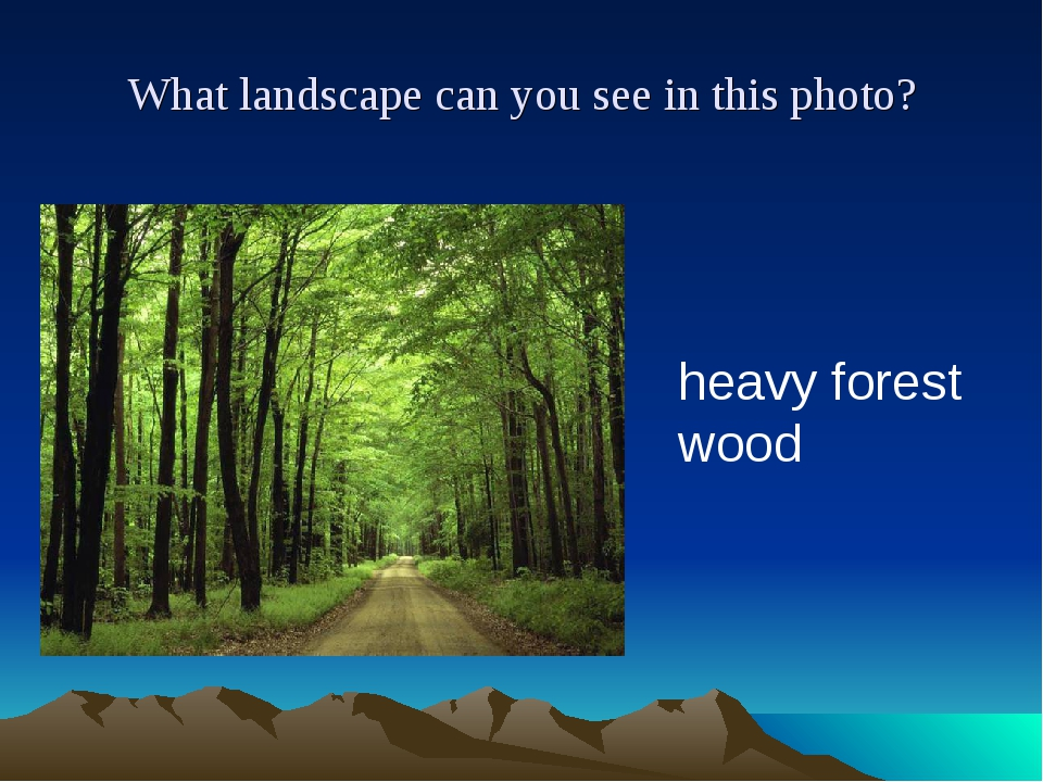 What landscape can you see in this photo? heavy forest wood