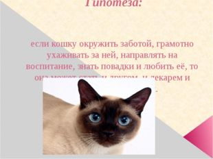 Гипотеза: если кошку окружить заботой, грамотно ухаживать за ней, направлять