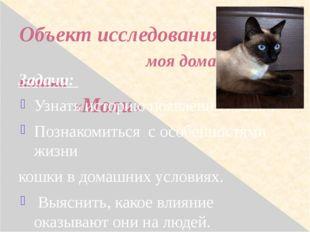Объект исследования: моя домашняя кошка «Моли» Задачи: Узнать историю появлен