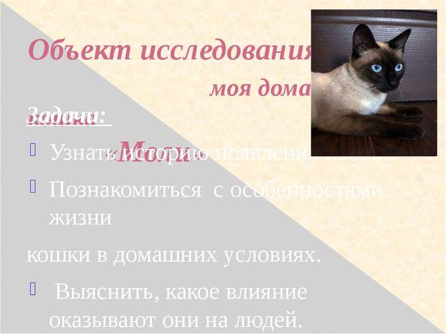 Объект исследования: моя домашняя кошка «Моли» Задачи: Узнать историю появлен...