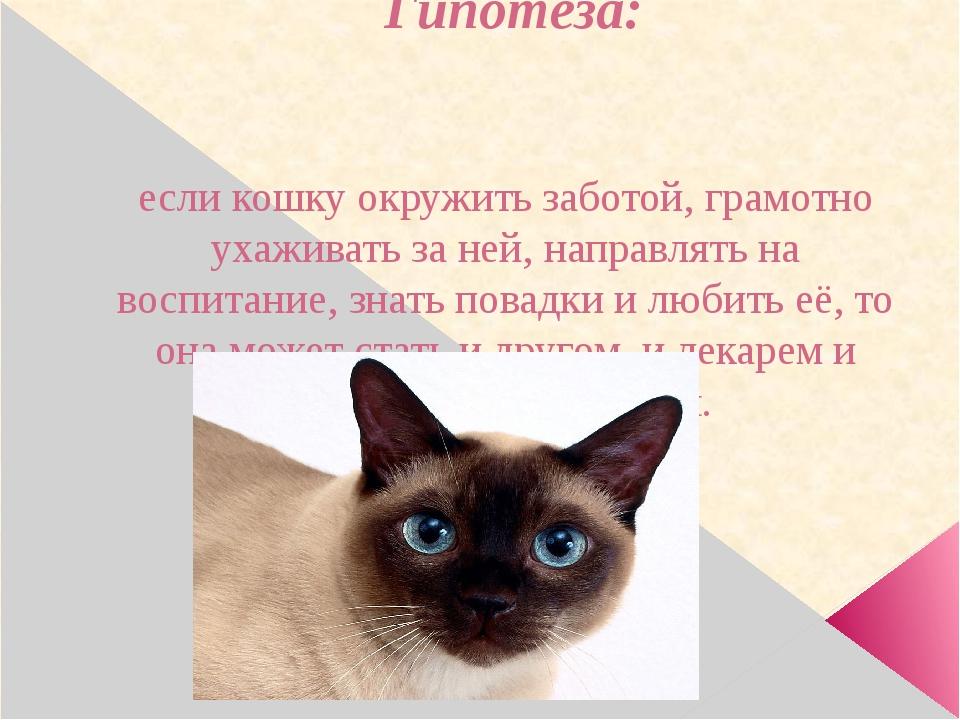 Гипотеза: если кошку окружить заботой, грамотно ухаживать за ней, направлять...