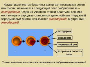 Когда число клеток бластулы достигает нескольких сотен или тысяч, начинается