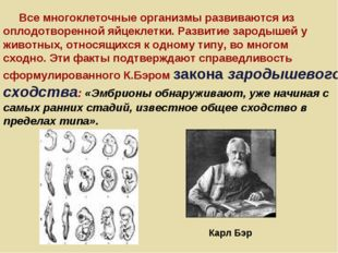 Карл Бэр Все многоклеточные организмы развиваются из оплодотворенной яйцеклет