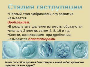 Первый этап эмбрионального развития называется дроблением. В результате делен