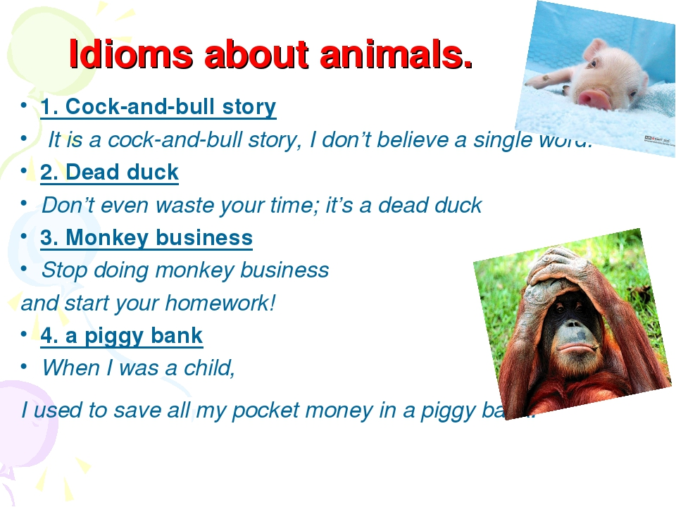 Idioms about animals. 1. Cock-and-bull story It is a cock-and-bull story, I...