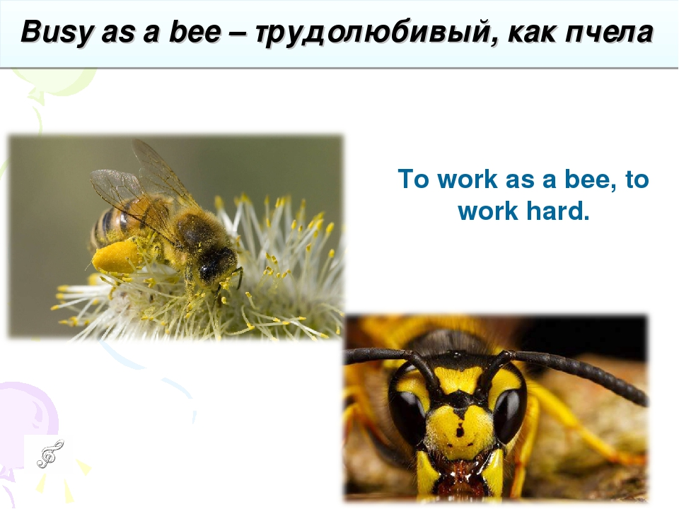 Busy as a bee – трудолюбивый, как пчела To workas a bee,to work hard.