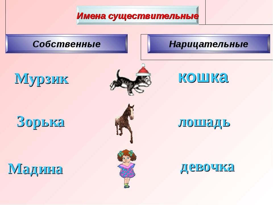 Мурзик кошка Зорька девочка лошадь Мадина