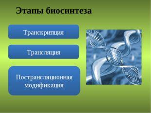Этапы биосинтеза Транскрипция Трансляция Пострансляционная модификация