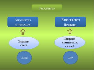 Биосинтез Биосинтез углеводов Биосинтез белков Энергия света Энергия химическ