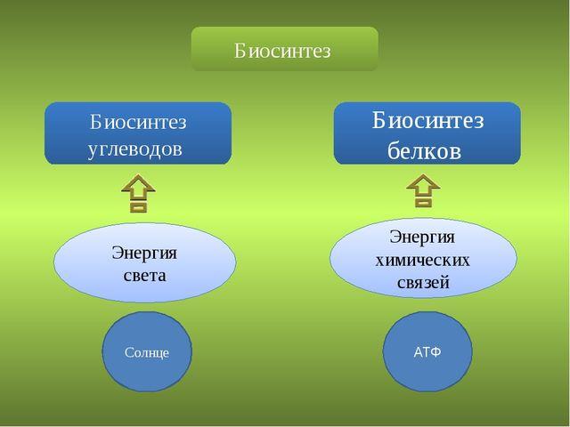 Биосинтез Биосинтез углеводов Биосинтез белков Энергия света Энергия химическ...