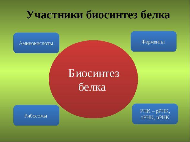 Участники биосинтез белка Аминокислоты Ферменты Рибосомы РНК – рРНК, тРНК, иР...