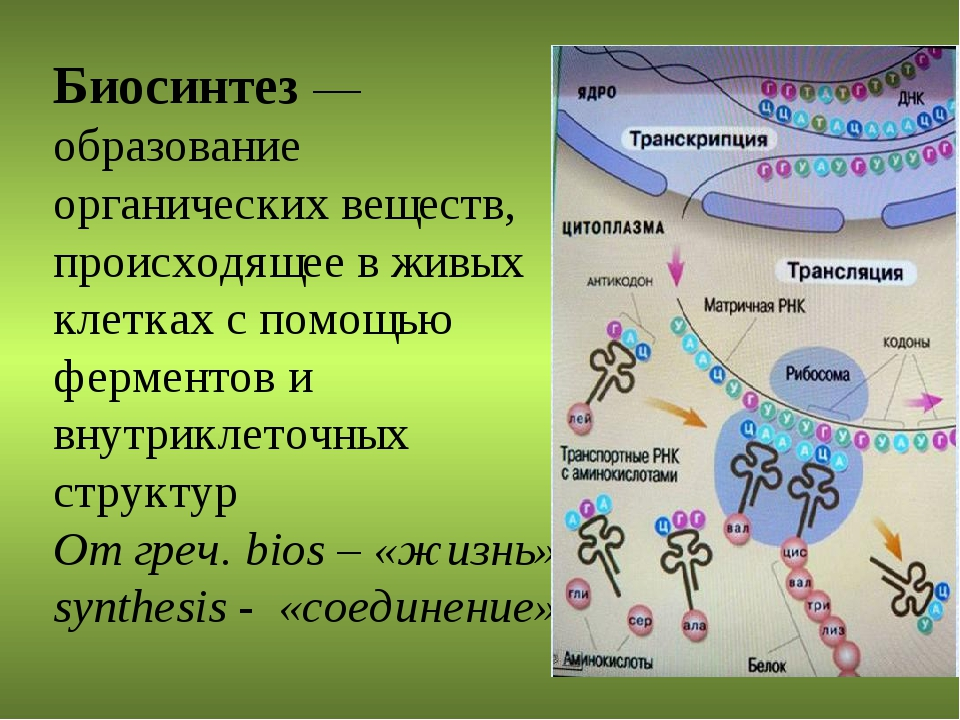 Биосинтез — образование органических веществ, происходящее в живых клетках с...