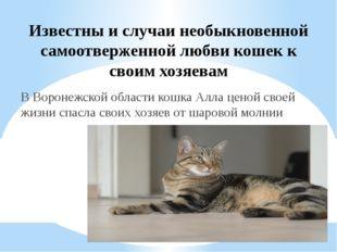 Известны и случаи необыкновенной самоотверженной любви кошек к своим хозяевам