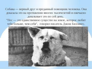 Собака— верный друг ипреданный помощник человека. Она доказала это напротя