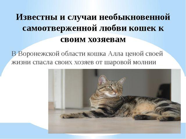 Известны и случаи необыкновенной самоотверженной любви кошек к своим хозяевам...
